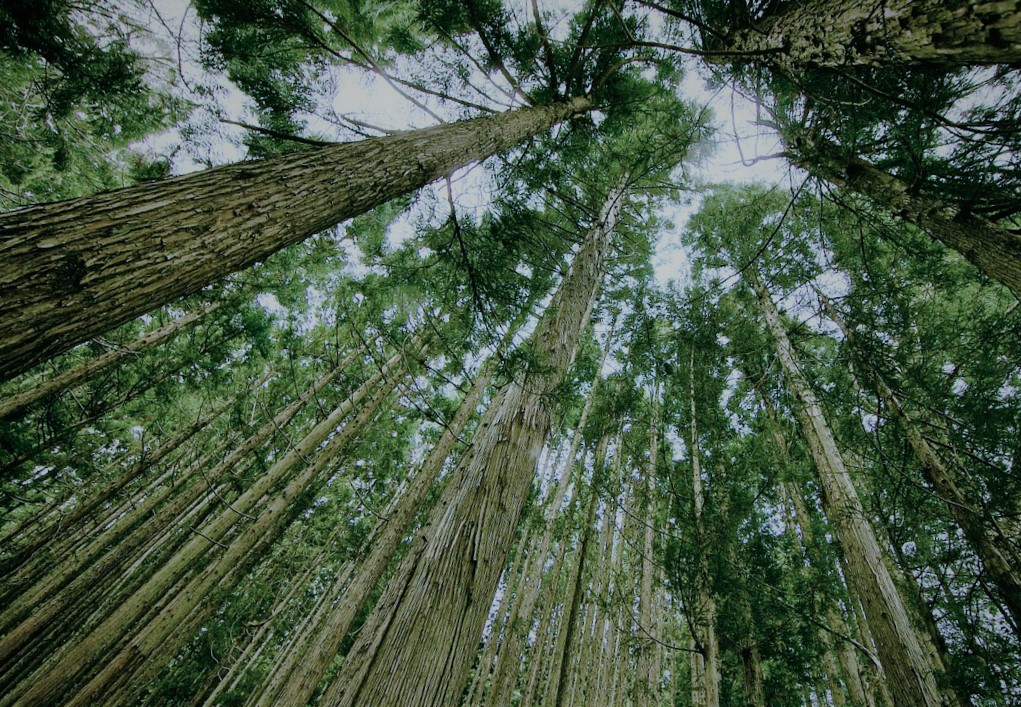 Tokia Saïfi: une croissance compatible avec l'écologie